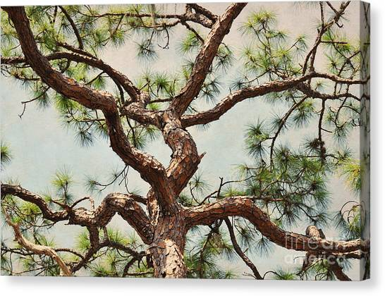 Pine Tree Canvas Print by Rose  Hill