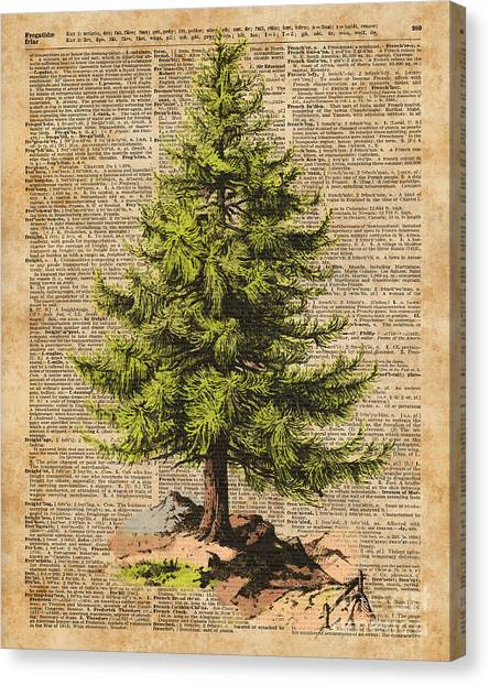 Pine Trees Canvas Print - Pine Tree,cedar Tree,forest,nature Dictionary Art,christmas Tree by Anna Wilkon