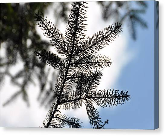 Pine View Canvas Print by JAMART Photography