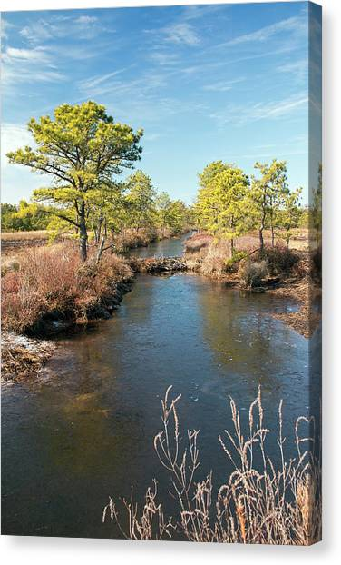 Pinelands Water Way Canvas Print