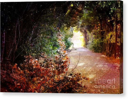 Piner Creek Path Canvas Print