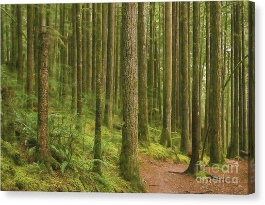 Pines Ferns And Moss Canvas Print