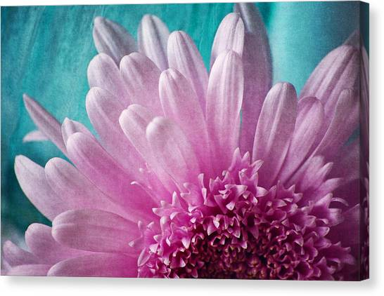 Pink And Aqua Canvas Print