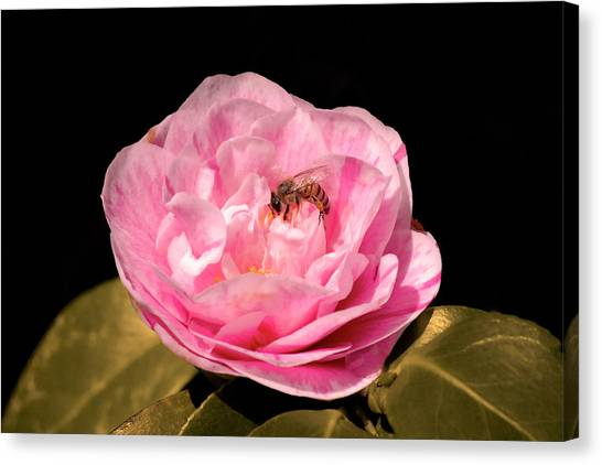 Pink And Bee Canvas Print