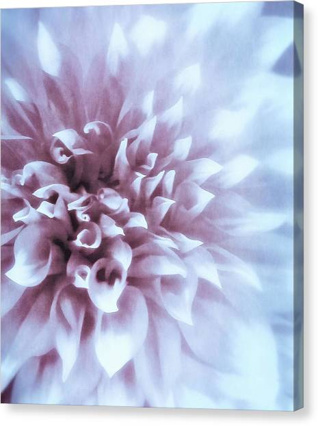 Pink And Blue Dahlia Canvas Print