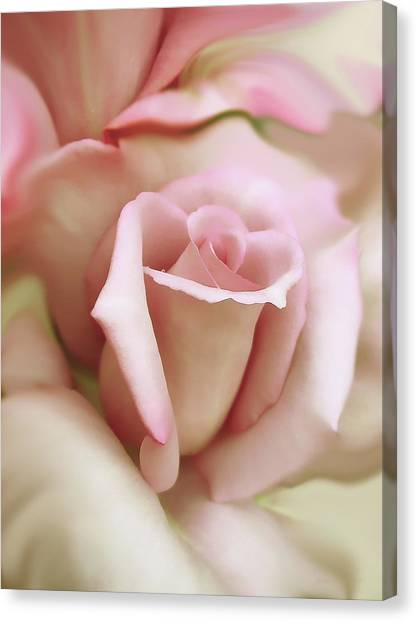 Pink And Ivory Rose Portrait Canvas Print
