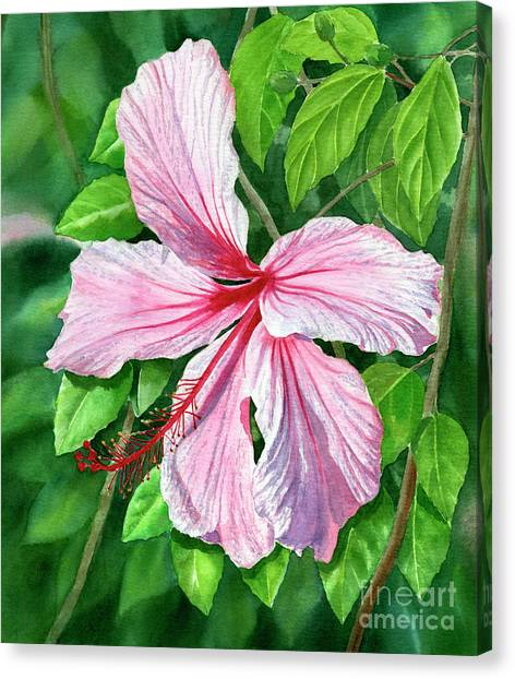 Hawaiian Flower Canvas Print - Pink And Red Hibiscus by Sharon Freeman
