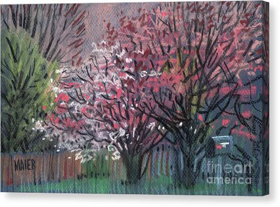 Spring Canvas Print - Pink And White Dogwoods by Donald Maier
