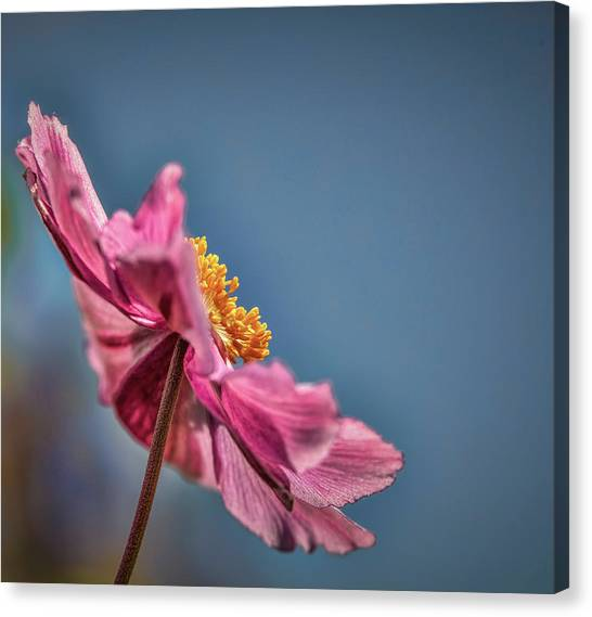 Canvas Print featuring the photograph Pink And Yellow Profile #h8 by Leif Sohlman