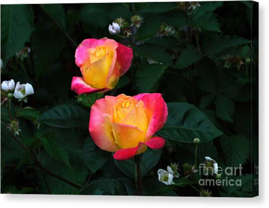 Pink And Yellow Rose With Raspberrys Canvas Print