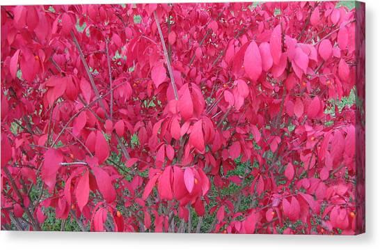 Pink Canvas Print by Andrea Kilbane