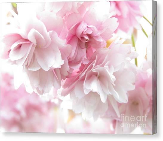 Pink April Canvas Print