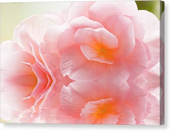 Pink Begonia Reflection 1 Macro Canvas Print