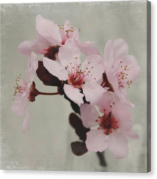Cherries Canvas Print - Pink Blossoms 1- Art By Linda Woods by Linda Woods