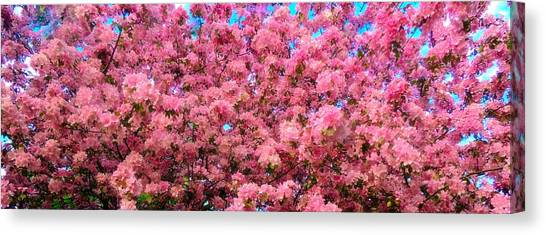 Pink Blossoms Of Spring Canvas Print