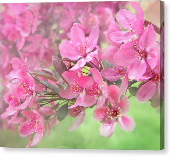 Mimosa Canvas Print - Pink Blossoms by Art Spectrum