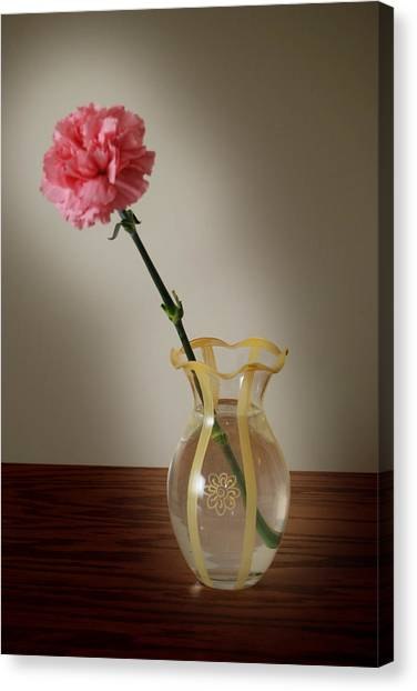 Pink Carnation Canvas Print by Dave Chafin