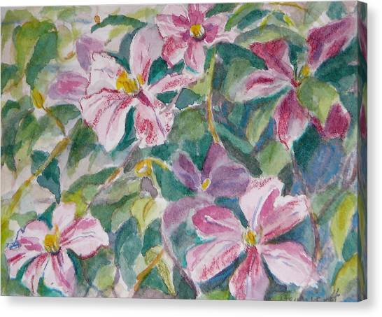 Pink Clematis Canvas Print