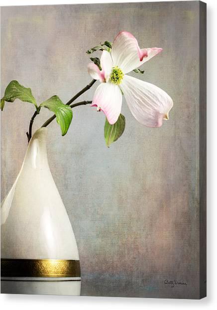 Pink Cornus Kousa Blossom In Creamer Canvas Print
