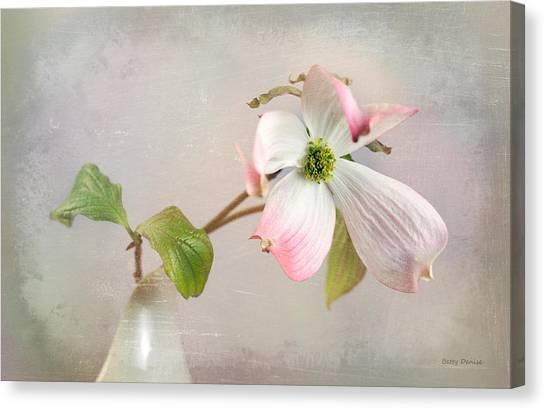 Pink Cornus Kousa Dogwood Blossom Canvas Print