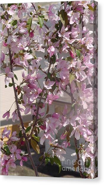 Pink Crabapple Branch Canvas Print