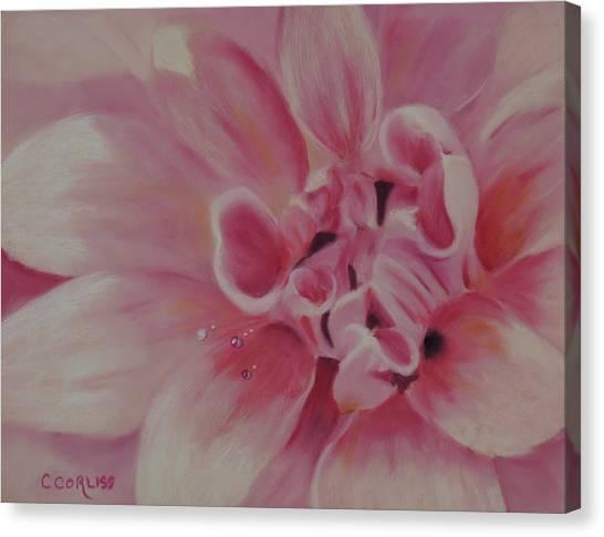 Pink Dahlia II Canvas Print