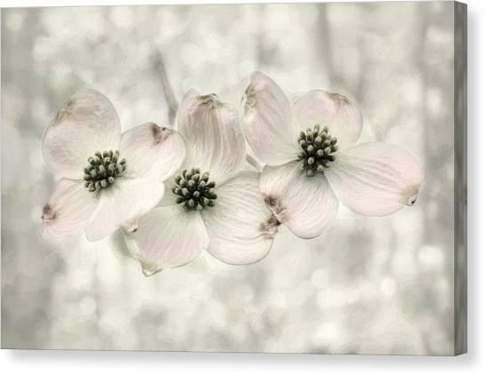 Blossom Canvas Print - Pink Dogwood Blossoms by Lori Deiter