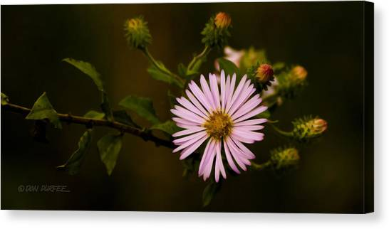 Canvas Print - Pink by Don Durfee