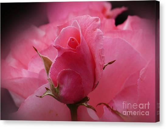 Pink Dream Canvas Print by Lutz Baar
