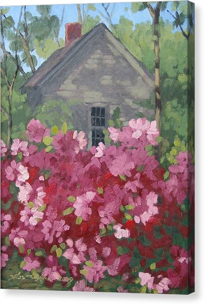 Pink Explosion Canvas Print by Peter Muzyka