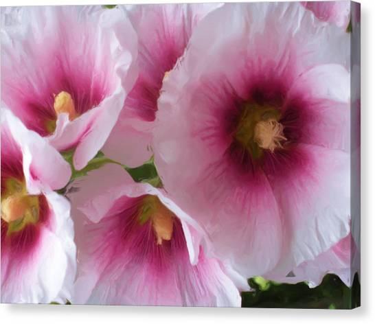 Pink-faced Hollyhocks Canvas Print