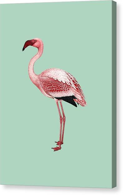 Pink Flamingo Isolated Canvas Print