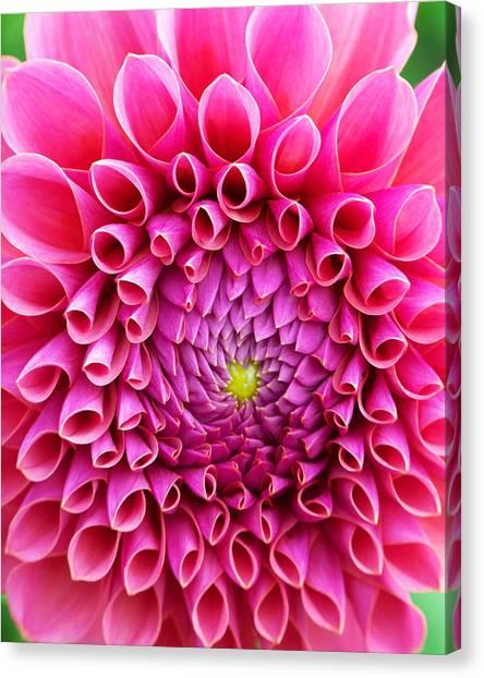 Pink Flower Close Up Canvas Print