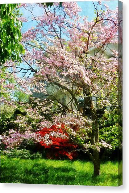 Pink Flowering Dogwood Canvas Print by Susan Savad