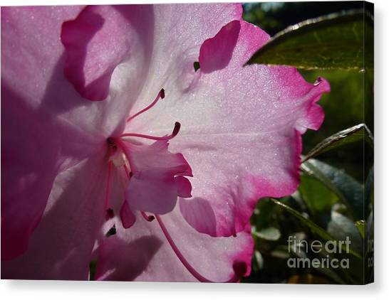 Pink Flowers 1 Canvas Print