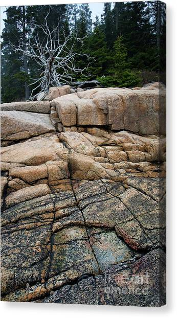 Pink Granite And Driftwood At Schoodic Peninsula In Maine  -4672 Canvas Print