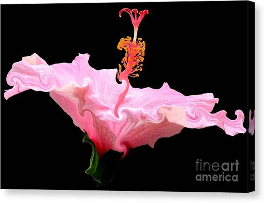 Canvas Print featuring the photograph Pink Hibiscus With Curlicue Effect by Rose Santuci-Sofranko