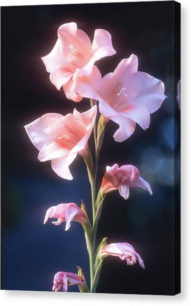 Canvas Print featuring the photograph Pink Iris by John Brink