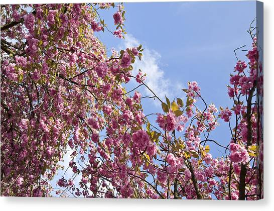 Pink Canvas Print by Krista  Corcoran Photography