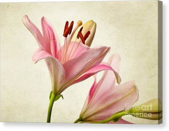 Flower Canvas Print - Pink Lilies by Nailia Schwarz