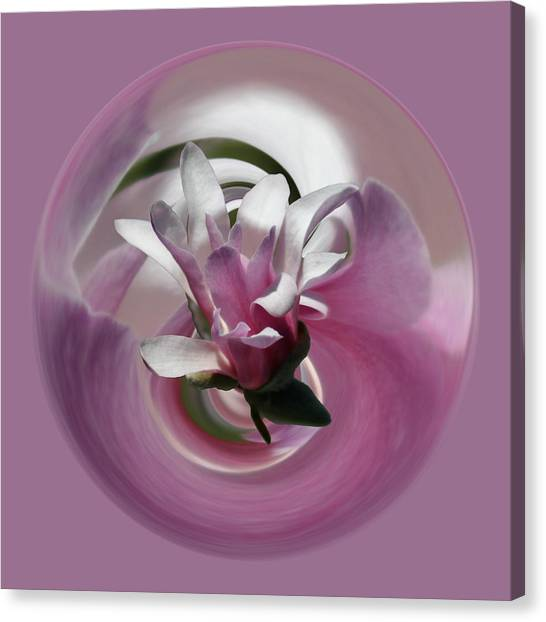 Canvas Print featuring the photograph Pink Magnolia by Jim Baker