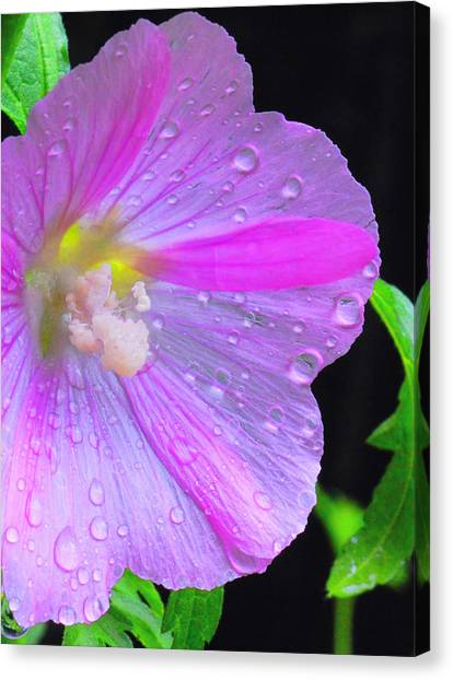 Canvas Print - Pink Mallow by Peg Runyan