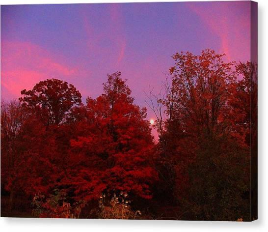 Pink Moonlite Night Canvas Print by Judy  Waller