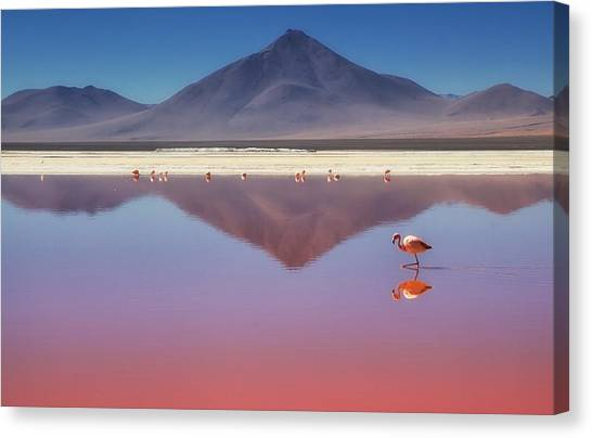 Flamingos Canvas Print - Pink Morning by Margarita Chernilova