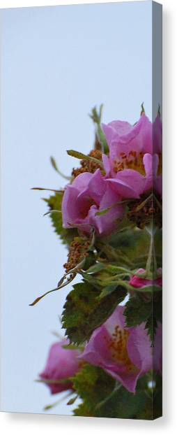 Pink On The Edge Canvas Print by Jean Booth