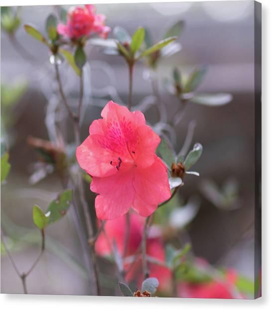 Pink Orange Flower Canvas Print