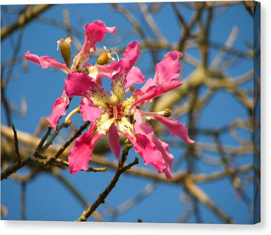 Pink Orchid Tree Canvas Print