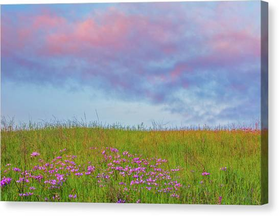 Contra Canvas Print - Pink  Over Pink  by Marc Crumpler