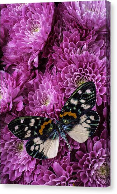 Pom-pom Canvas Print - Pink Poms And Butterfly by Garry Gay