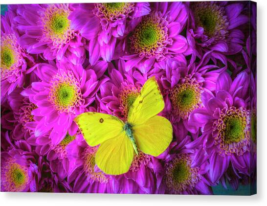 Pom-pom Canvas Print - Pink Poms And Yellow Butterfly by Garry Gay